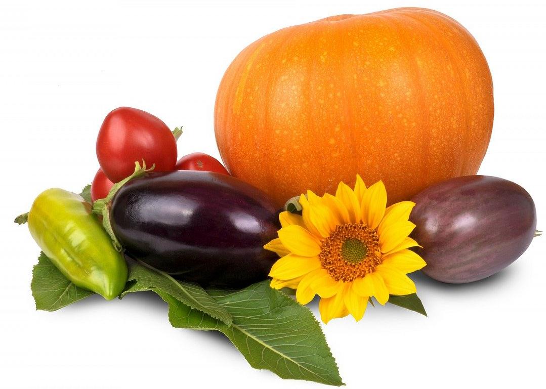 Unterschiedliches Gemüse. Kürbis, Tomaten, Aubgergine.